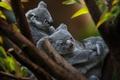 Картинка детеныш, коала, милые