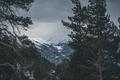 Картинка деревья, пейзаж, горы, облачно, архыз