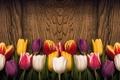 Картинка цветы, сердце, colorful, тюльпаны, red, love, wood, romantic, tulips, spring