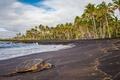 Картинка США, черепаха, на берегу, Гавайи, тропики, море, лежит, пальмы