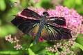 Картинка блеск, лето, насекомые, крылышки, зелень, красивая, стрекоза, яркая, сияние, макро, цветы