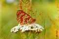 Картинка Бабочка, Цветочки, Flowers, Боке, Bokeh, Butterfly