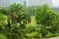 Картинка тропики, Сингапур, зелень, Gardens By the Bay, кусты, деревья, дома, парк, пальмы, цветы
