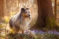 Картинка цветы, собака, весна