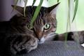 Картинка кот, глаза, взгляд