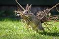Картинка ситуация, трава, гнездование, кролик