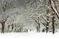 Картинка зима, снег, деревья, Англия, Саутгемптон