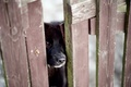 Картинка грусть, забор, собака