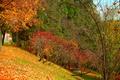 Картинка Fall, Colors, Autumn, Деревья, Leaves, Листва, Осень, Trees