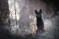 Картинка природа, лес, собака