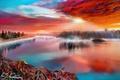 Картинка закат, небо, by exobiology, озеро, деревья, туман, природа, цветы