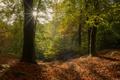 Картинка лес, осень, Brittany, солнце, Уегоа, Huelgoat, листва, деревья, France, Франция, лучи, Бретань