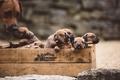 Картинка щенки, собаки, ящик