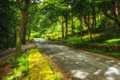 Картинка лес, зелень, Hilterfingen, деревья, дорога, парк, Canton of Bern, Швейцария