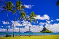 Картинка газон, облака, тропики, горизонт, небо, солнце, Гавайи, скалы, США, море, побережье, Hawaii, пальмы