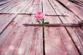 Картинка роза, цветок, дверь