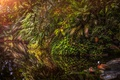 Картинка листья, утки, обработка, водоём, masoala duck