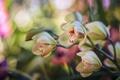Картинка орхидея, ветка, макро, боке