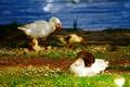 Картинка гусята, пруд, трава, ярко, водоем, боке, гусь, природа, свет, гуси, домашние, река, лето, зелень, утята, ...
