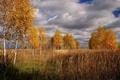 Картинка Fall, Trees, Sky, Clouds, Autumn, Деревья, Облака, Небо, Осень