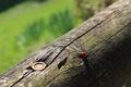 Картинка весна, bug, кора, animal, green, насекомое, bokeh, зелень, боке, lady bug, божья коровка, macro, животное, ...