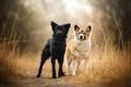 Картинка природа, собаки, друзья