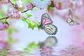 Картинка вода, цветы, отражение, бабочка, сакура