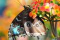 Картинка цветок, макро, бабочка, боке