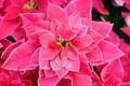 Картинка листики, розовый, цветок, цветение