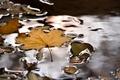 Картинка природа, вода, лист