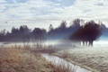 Картинка природа, осень, утро, туман