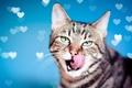 Картинка кот, язык, сердечки, фон, мордочка, взгляд, кошка