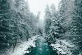 Картинка лес, река, деревья, природа, зима, снег