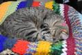 Картинка кот, спит, плед