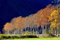 Картинка осень, деревья, пейзаж, Франция, Прованс-Альпы-Лазурный берег, Малоссен