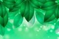 Картинка листья, зеленые, рисунок