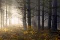 Картинка лес, папоротник, свет, утро, туман