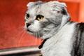 Картинка кот, глаза, усы