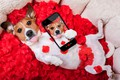 Картинка собака, лепестки, red, love, rose, красная роза, dog, romantic, funny, valentine, petals, phone