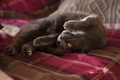 Картинка кошка, поза, лапки