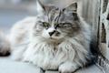 Картинка глаза, шерсть, кошка
