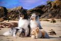 Картинка море, собаки, побережье, пушистики, группа