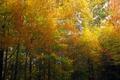 Картинка Trees, Colors, Forest, Autumn, Деревья, Лес, Fall, Осень, Золотая осень, Golden autumn