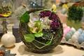 Картинка орхидея, композиция, сервировка