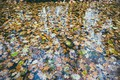 Картинка осень, листья, улица