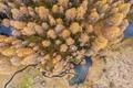Картинка осень, деревья, природа, вид сверху, водоемы