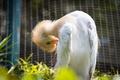 Картинка bird park, birds, kuala lumpur, bird, animal