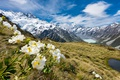 Картинка Mueller glacier, лютики, Mount Cook, горы, снег, New Zealand, вершины