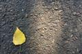 Картинка желтый, осень, лист, асфальт, минимализм