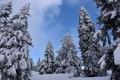 Картинка холод, зима, небо, снег, деревья, природа